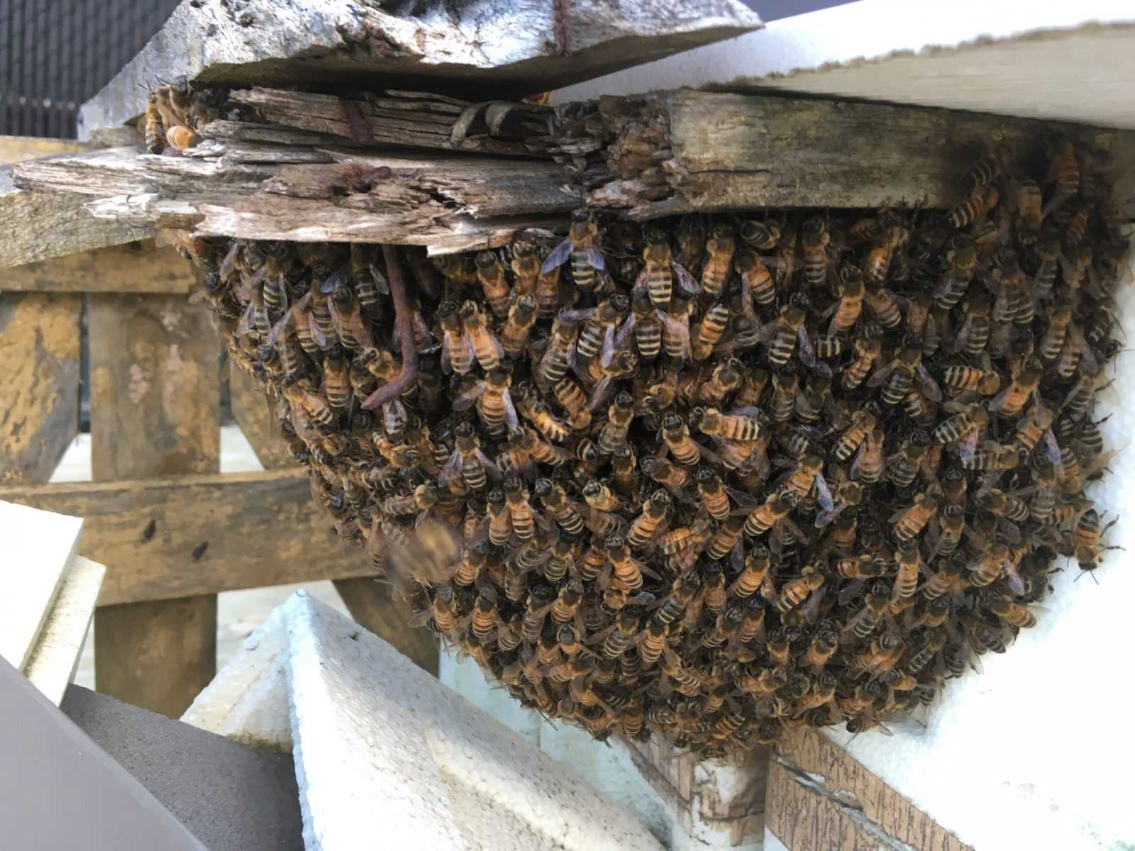 Bee Removals | Rockland Bee Removal